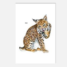 Bobcat Wild Cat Postcards (Package of 8)