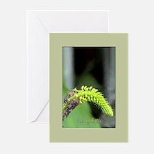 sarcoglottis orchid Greeting Cards (Pk of 10)