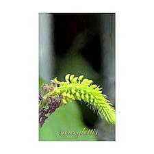 sarcoglottis orchid Rectangle Decal