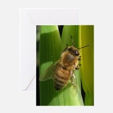 White Flower Bee Greeting Card