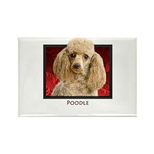 Poodle Rectangle Magnet