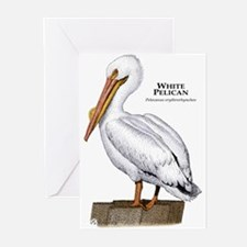 White Pelican Greeting Cards (Pk of 10)