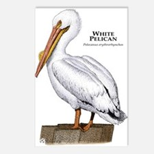 White Pelican Postcards (Package of 8)