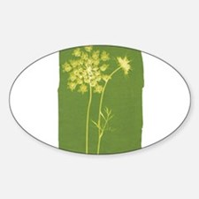 Queen Anne's Lace Oval Decal