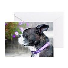 Boston Terrier Pup Greeting Card