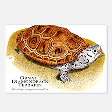 Ornate Diamondback Terrapin Postcards (Package of