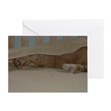 Orange Tabby Kitty Cat Greeting Card