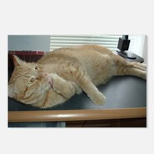 Orange Tabby Kitty Cat Postcards (Package of 8)