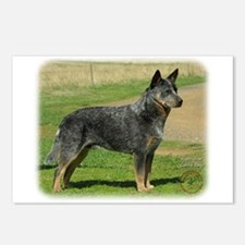 Australian Cattle Dog 9F060D-06 Postcards (Package