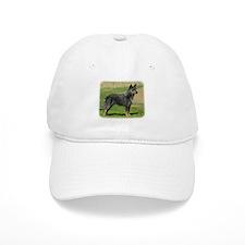 Australian Cattle Dog 9F060D-06 Baseball Cap