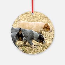 Australian Cattle Dog 8T57D-18 Ornament (Round)