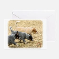 Australian Cattle Dog 8T57D-18 Greeting Card
