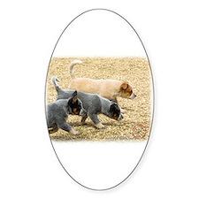 Australian Cattle Dog 8T57D-18 Decal