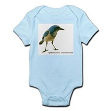 Florida Scrub Jay Infant Creeper