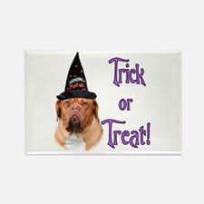 Dogue Trick Rectangle Magnet (100 pack)