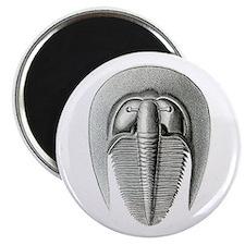 Trilobite Magnet