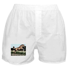 AFTM Frisky Foal Boxer Shorts