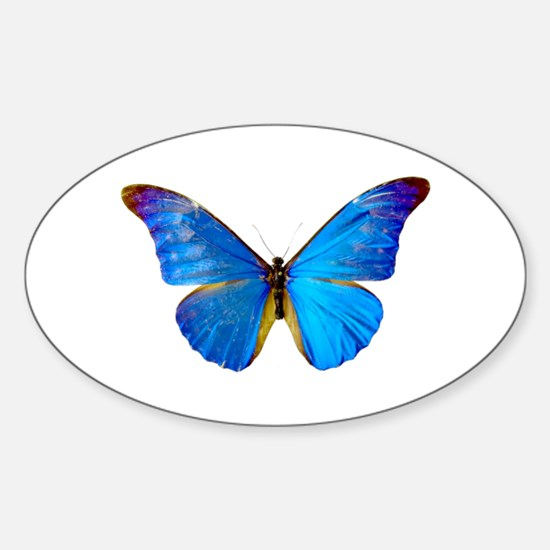 Blue Butterfly Oval Decal