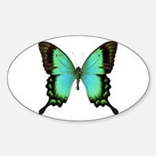 Green Butterfly Oval Decal