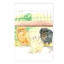Poms in Yard Postcards (Package of 8)