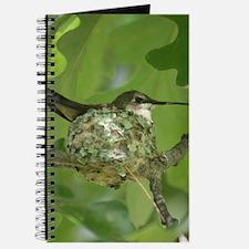 Hummingbird on a Nest Journal