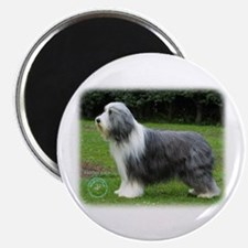 Bearded Collie 8R002D-16 Magnet