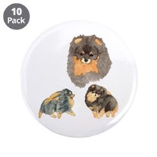 "Blk. & Tan Pomeranian Collage 3.5"" Button (10 pack"
