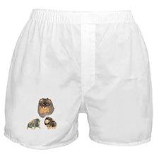 Blk. & Tan Pomeranian Collage Boxer Shorts