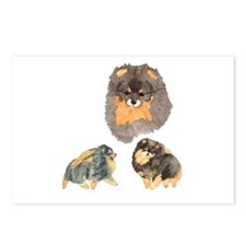 Blk. & Tan Pomeranian Collage Postcards (Package o