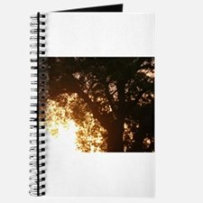 oak tree at dawn in sunrise with glowing y Journal