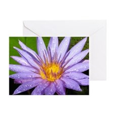 Purple Water Lily Greeting Cards (Pk of 20)
