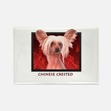 Chinese Crested Rectangle Magnet (10 pack)