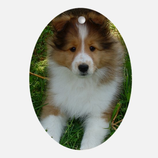 TLC OASIS SHELTIES Keepsake (Oval)