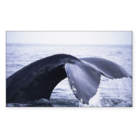 Whales Tail Rectangle Sticker