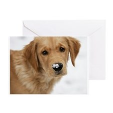 Snowy Nose Golden Greeting Cards (Pk of 10)