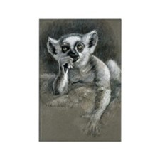 "Ring-tailed lemur infant ""Elfin"" Rectangle Magnet"