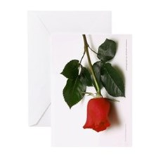 Rose Photography Greeting Cards (Pk of 10)