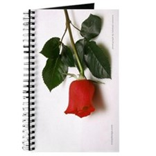 Rose Photography Journal
