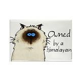 Himalayan cat Single