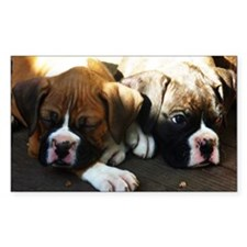 Boxer Rectangle Sticker 50 pk)