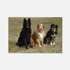 Belgian Sheepdog and Australian Shepherd Magnet