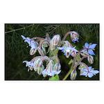 Janet Schroeder Rectangle Sticker 50 pk)