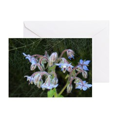 Janet Schroeder Greeting Cards (Pk of 10)