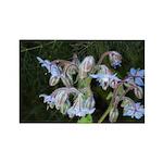 Janet Schroeder Rectangle Magnet (10 pack)