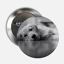 Pooped Golden Retriever Puppy Button