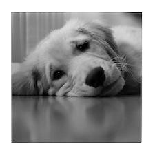 Pooped Golden Retriever Puppy Tile Coaster