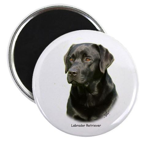 Labrador Retriever 9A054D-23a Magnet