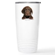 Chocolate Labrador Retriever puppy 9Y270D-050 Cera