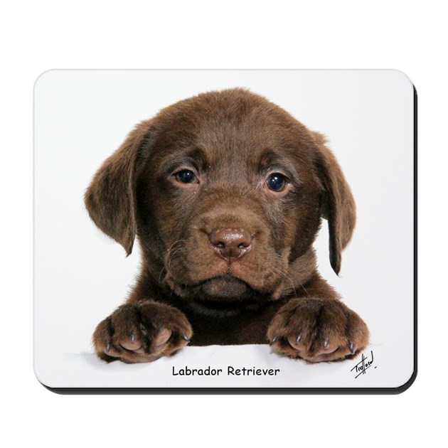 Labrador Retriever Kitchen Decor