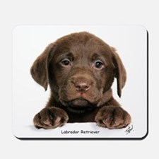 Chocolate Labrador Retriever puppy 9Y270D-050 Mous